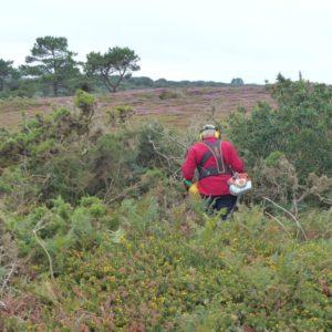 Chantier d'entretien des landes à la Pointe Sainte-Barbe