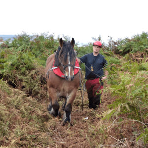 L'intervention d'un cheval pour l'arrachage de plantes exotiques envahissantes en falaise