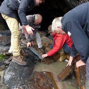 Opération de sauvegarde de patrimoine géologique