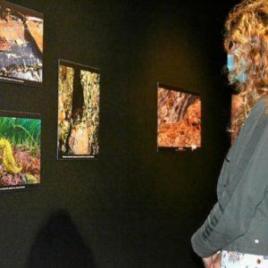 Ouverture de l'exposition «Pierres, feuilles, oiseaux»